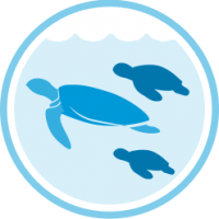 website marine plastic problem